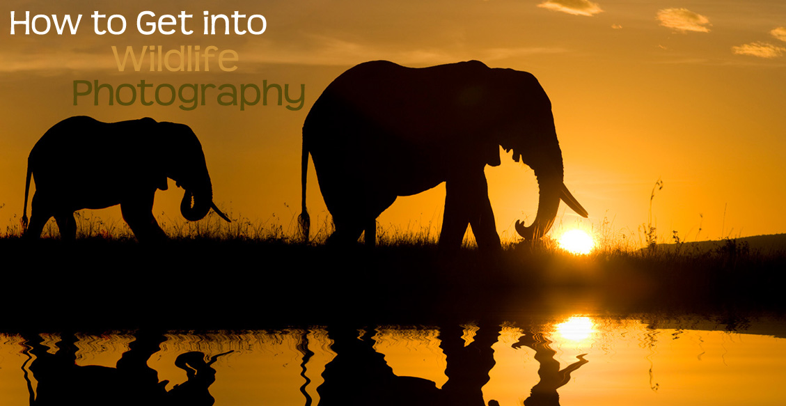 How to Get into Wildlife Photography