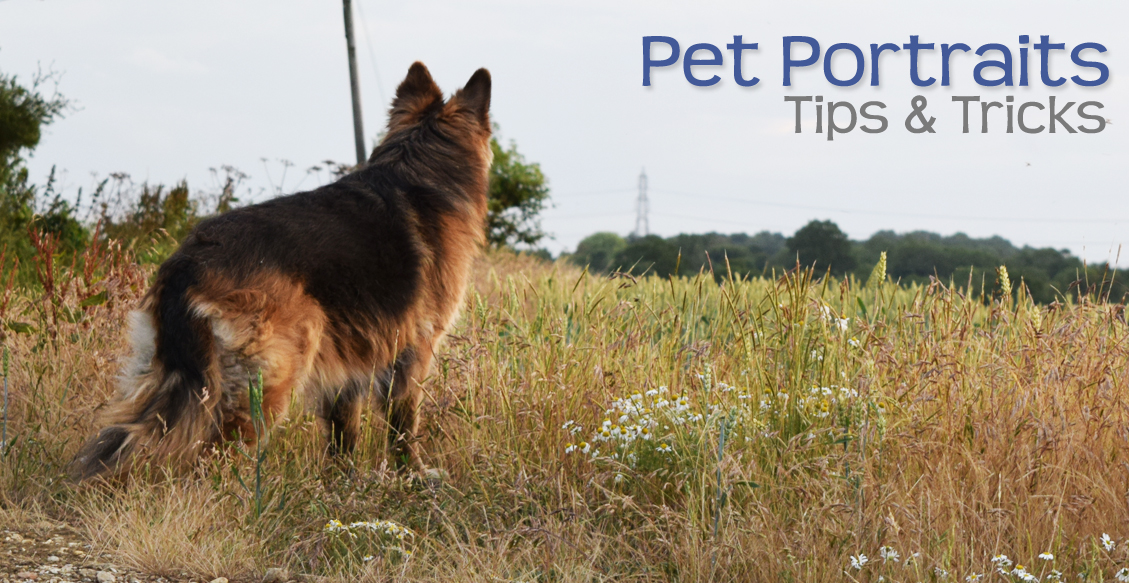Pet Portraits – Tips & Tricks