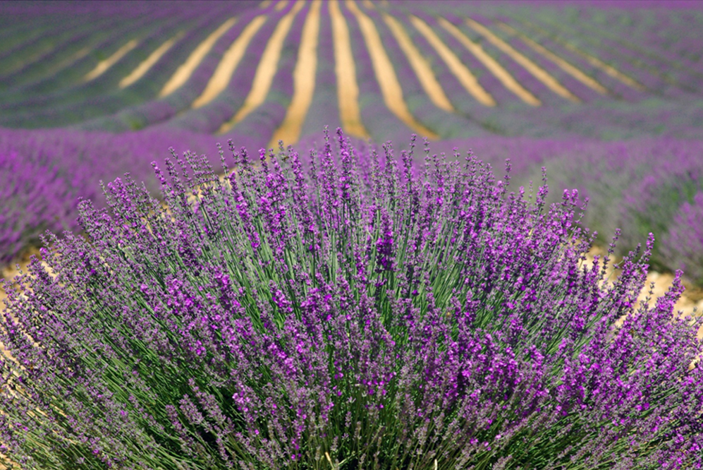 Places Every Photographer Should Visit Valensole Plateau France
